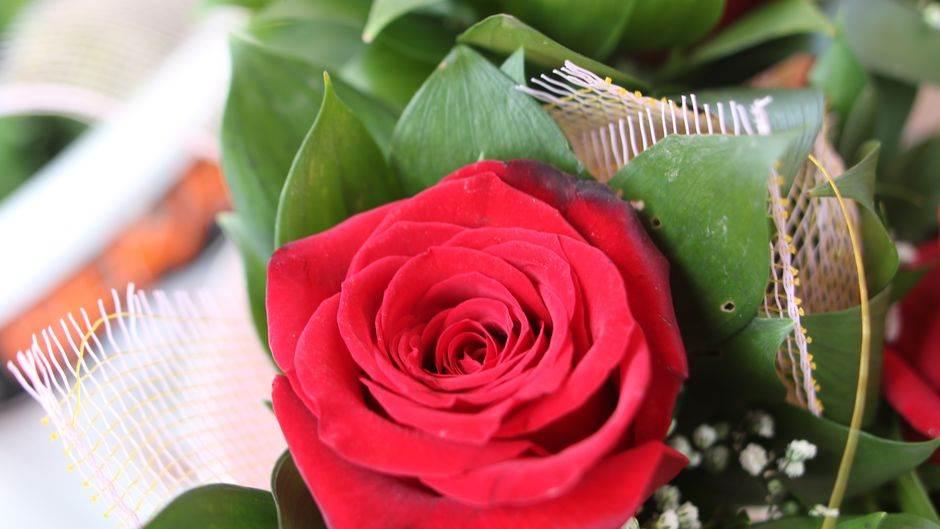cvijeće, dan žena