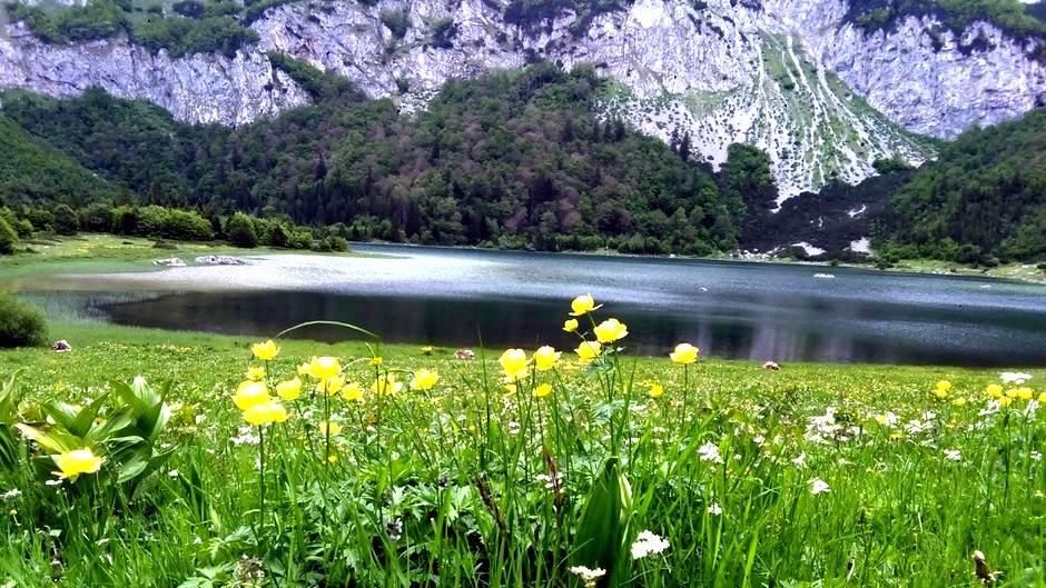 bilje, biljke, jezero