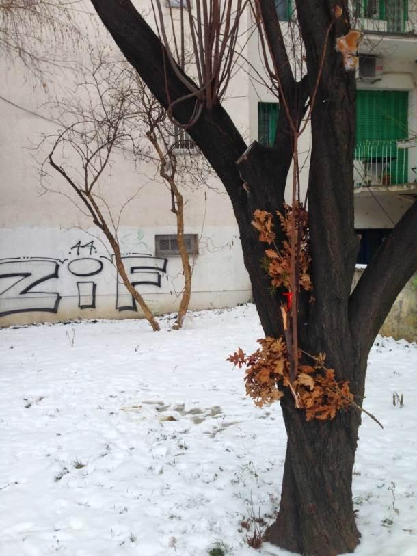 badnjak, božić, sneg, park, drvo