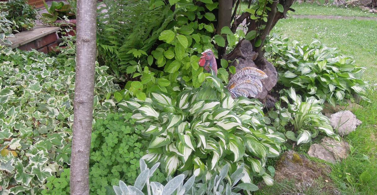 U Jagodinom vrtu sve raste, buja... (FOTO)