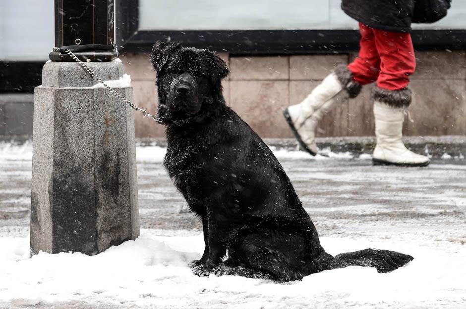 sneg, beograd, padavine, zima, hladno, mećava, pas, kuče, ljubimac, životinje, psi, pas na snegu