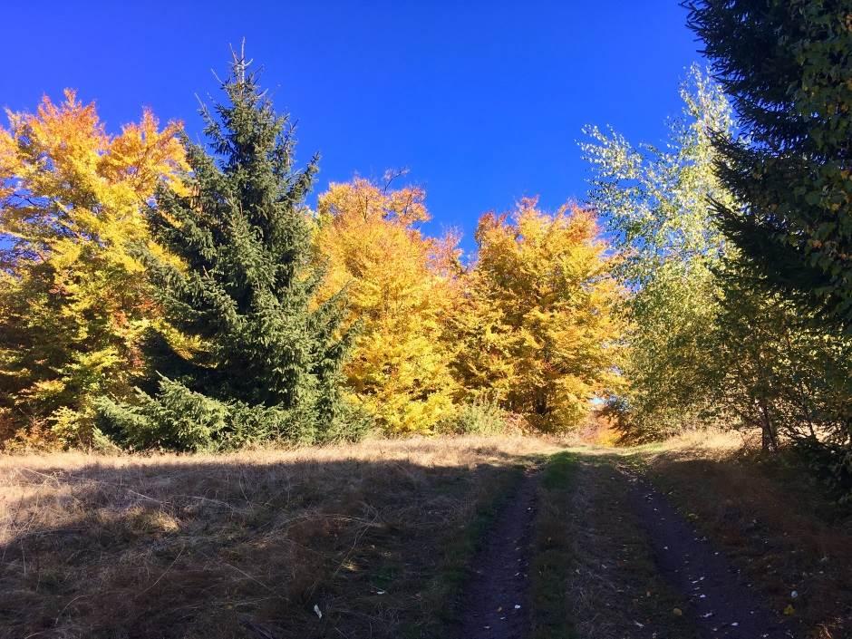 Kopaonik, planina, priroda, jesen