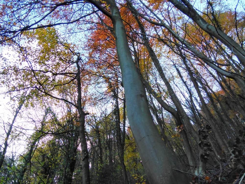 Priče iz bukove šume (FOTO, VIDEO)