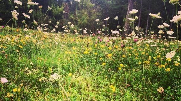 livada, priroda, trava, cveće, polje, leto