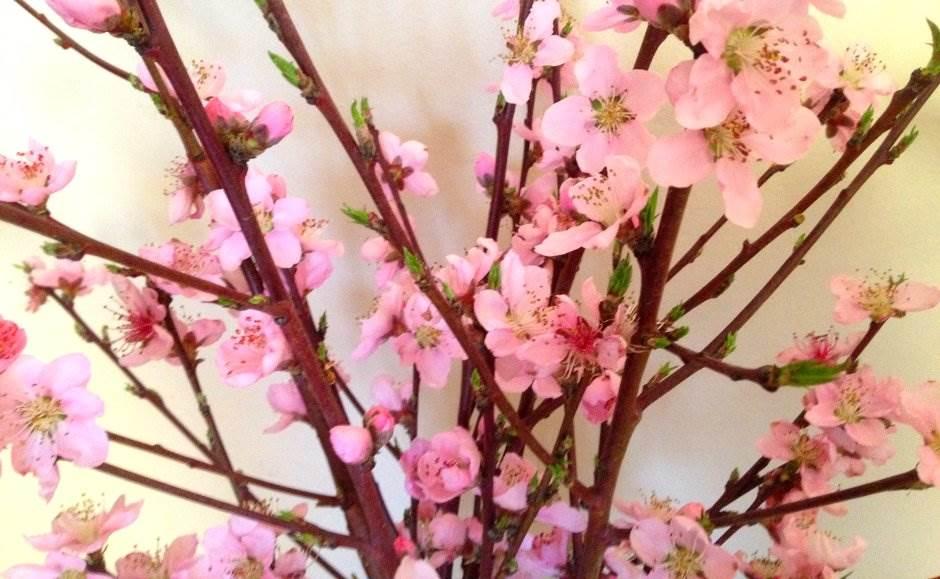 proleće, pupoljci, cveće