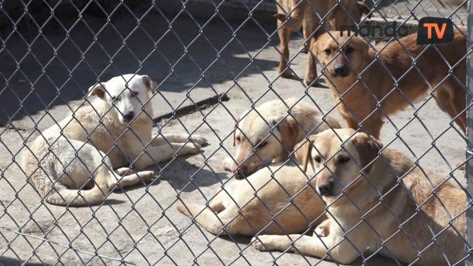 psi, pas, životinje, azil, ljubimci, azil za pse, mondo tv