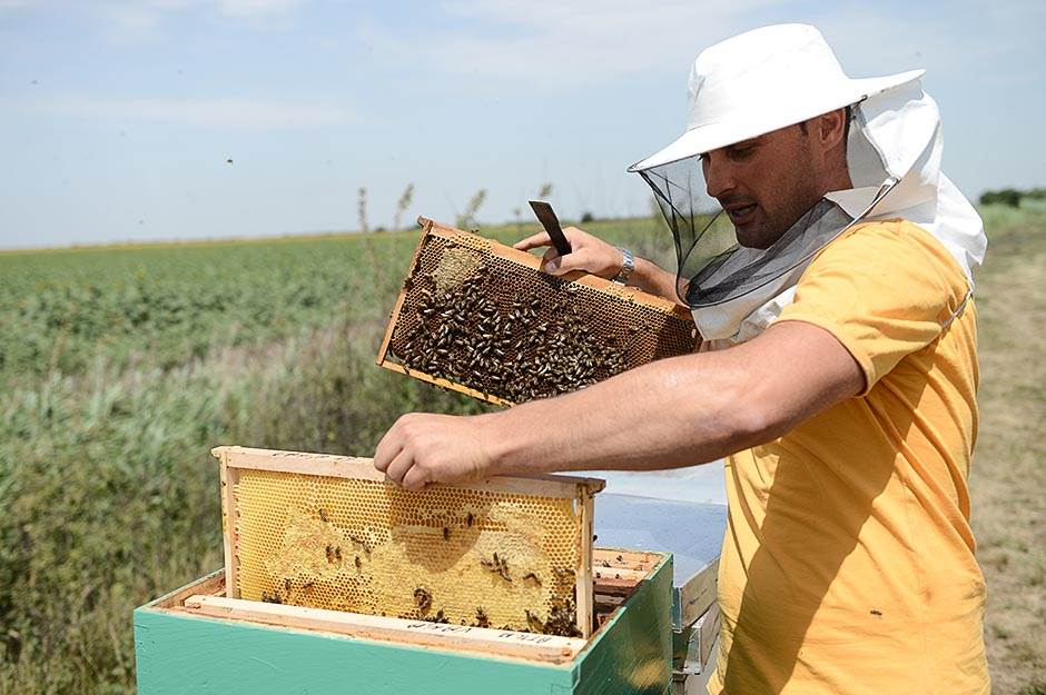 pčele, pčela, pčelar, med, pčelarstvo, pcele,