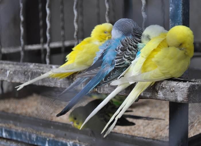 papagaj, ptice, ptica, zoo vrt