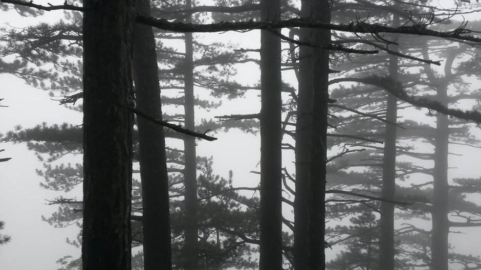 šuma, Perućica