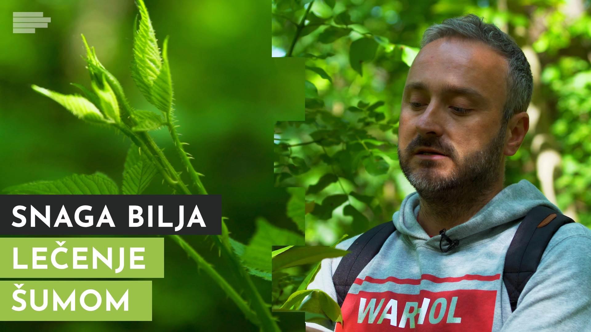 Snaga bilja: Liječenje šumom