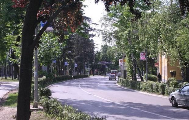 aleja, saobraćaj, ulica, drveće