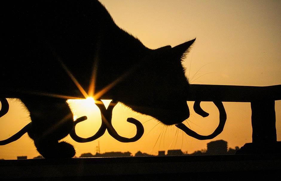 Mačak hoda po ogradi u svitanje.