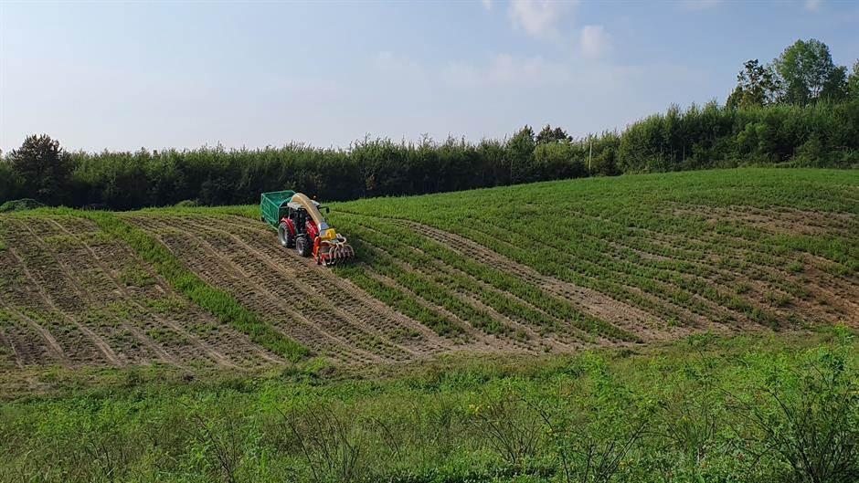 Lanaco, poljoprivreda