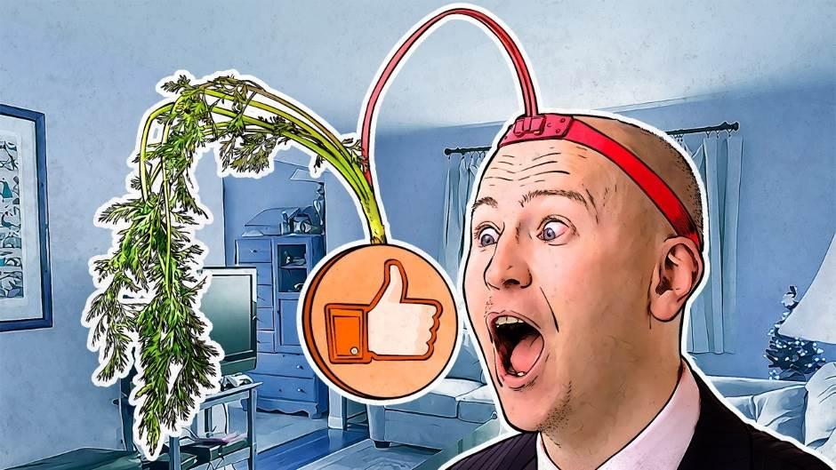 Facebook, lajk