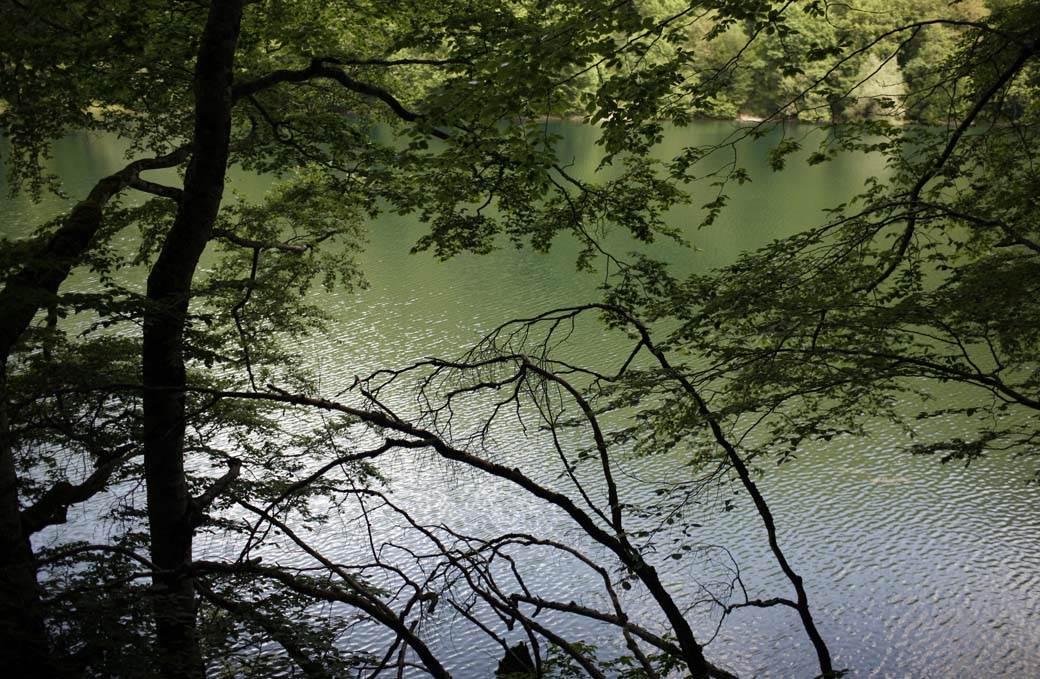 biogradsko jezero šuma mondo goran sivački (3).jpg