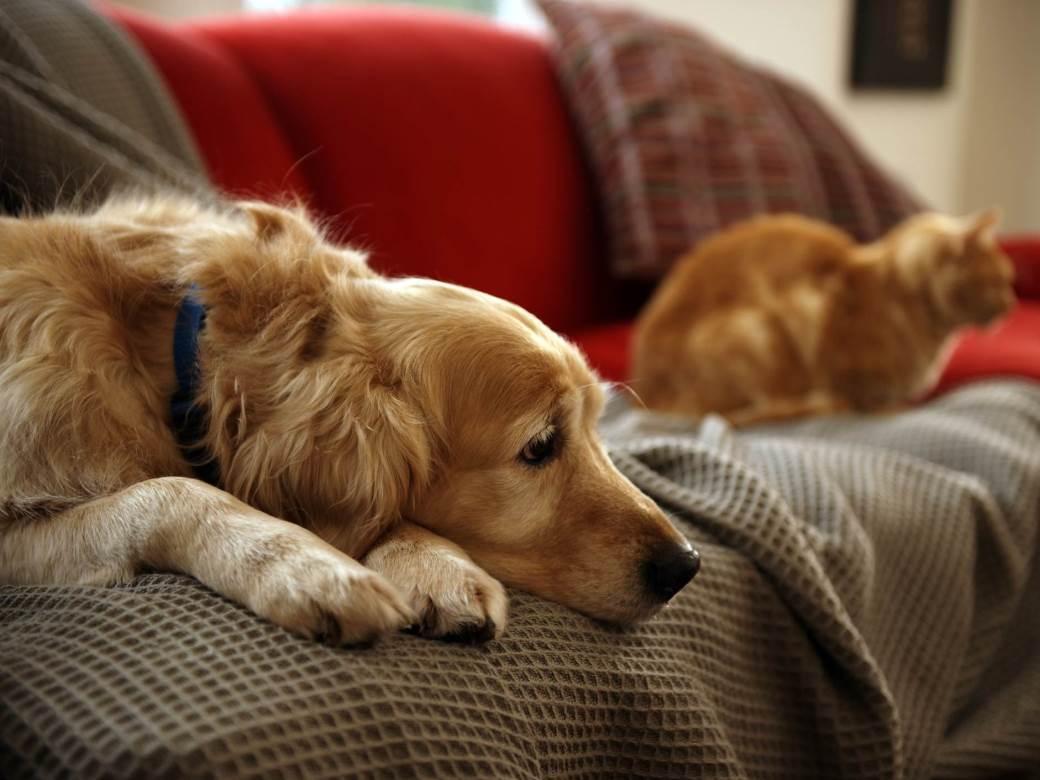 pas, mačka, ljubimci, životinje