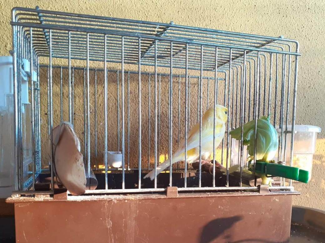 cvrle, papagaj, ljubimci