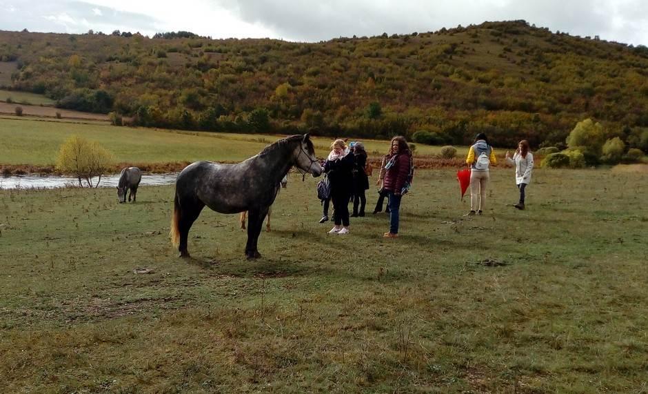 Livno, konji