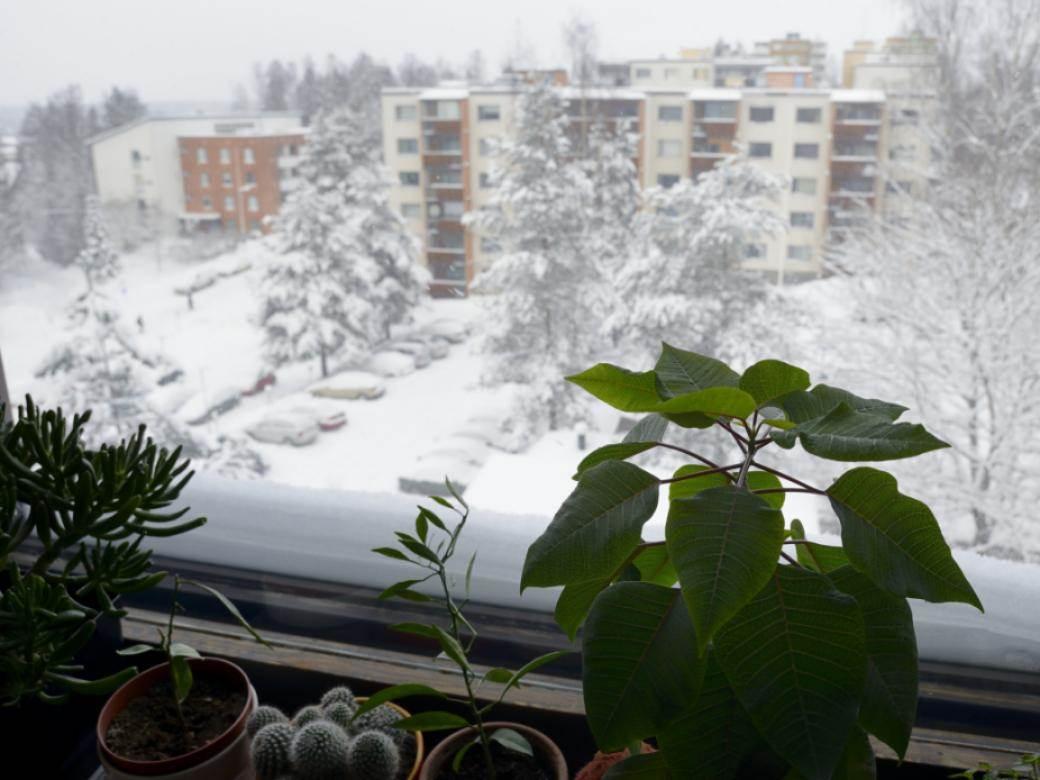 biljka prozor