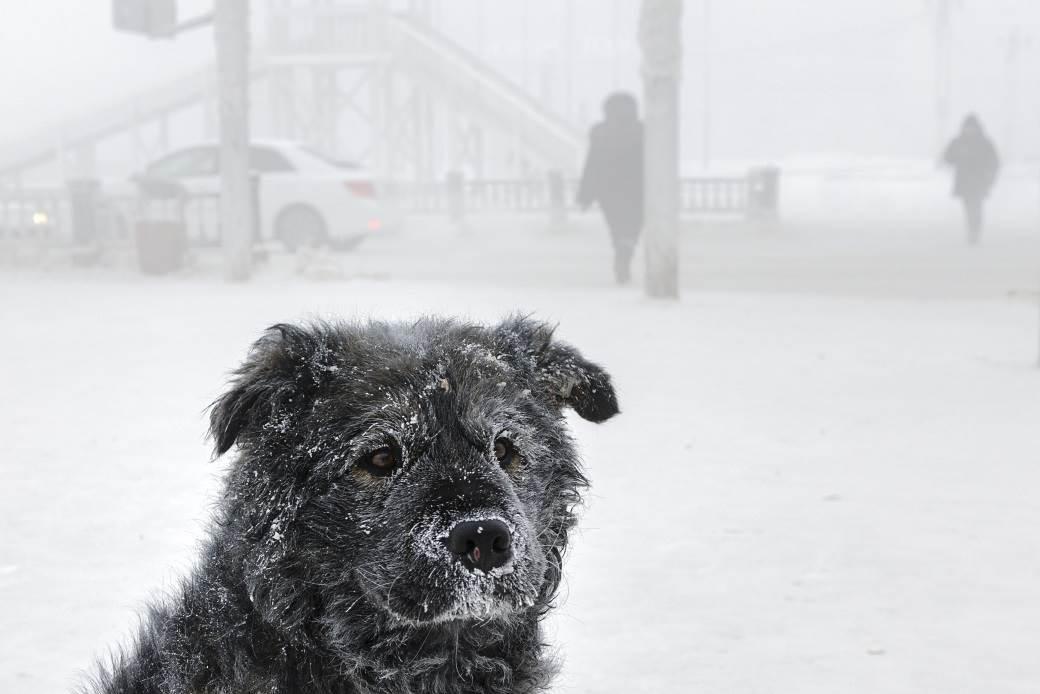 zima sneg jakutsk