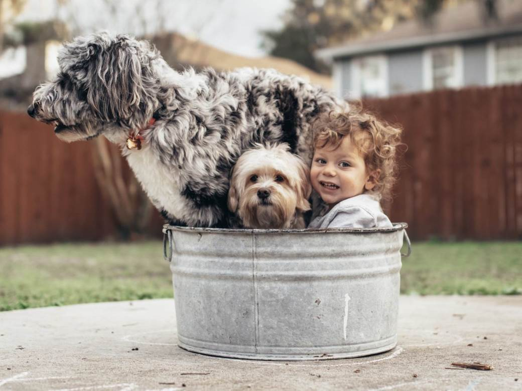 ljubimci, dijete, psi, pas