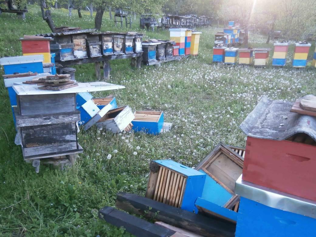 košnice, pčele, kostajnica
