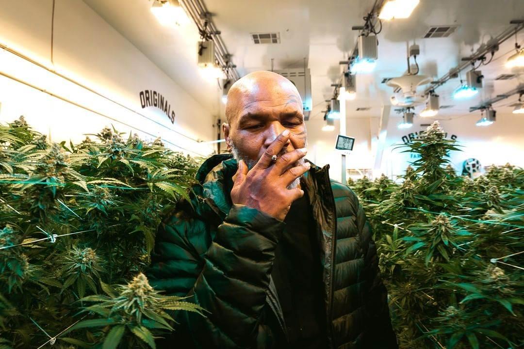 Majk Tajson puši marihuanu.