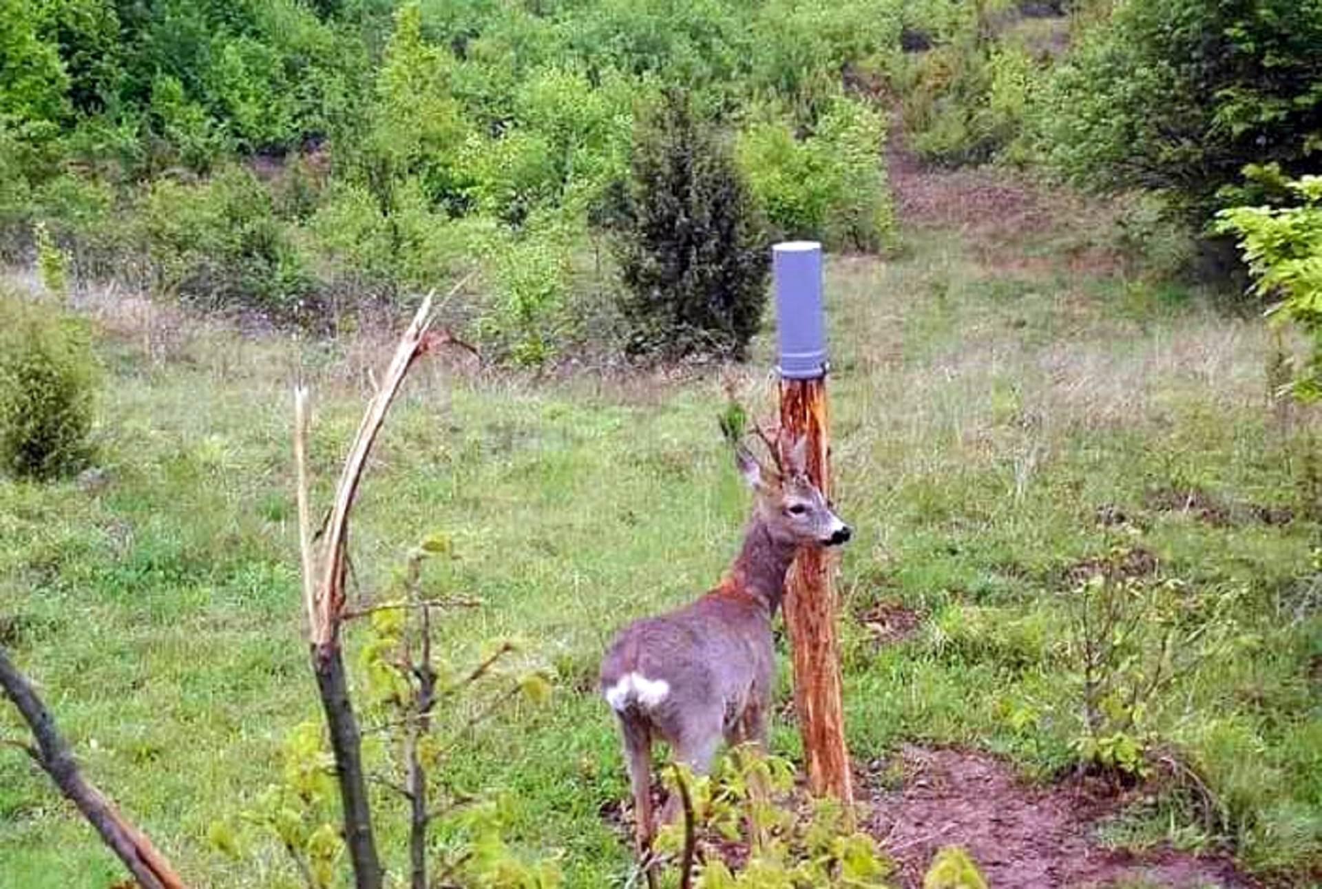 srndać, srna, jelen, lovište