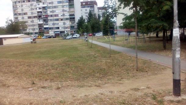 borik, zelena površina, park