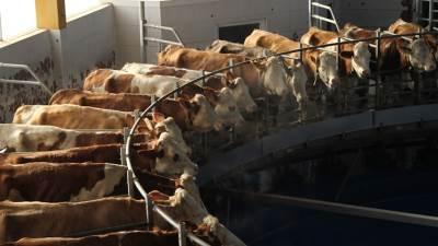 krave, farma, Spreča