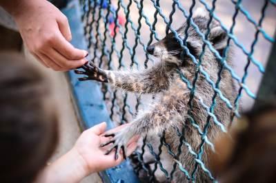 beo zoo vrt, divlje životinje, zoološki vrt