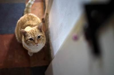 mačka, mačke, macka, februar, ljubimci,