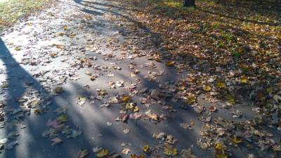 jesen, lišće, jesen u beogradu, beograd