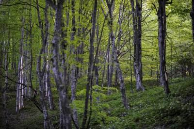 radan planina, radan, selo, šuma, priroda, prirodne lepote, siromaštvo, siromašan, seoski