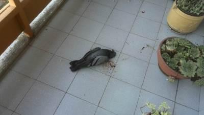 mrtve ptice