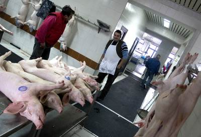 ilustracija, svinje, prasići, prase, klanje, mesara, mesar
