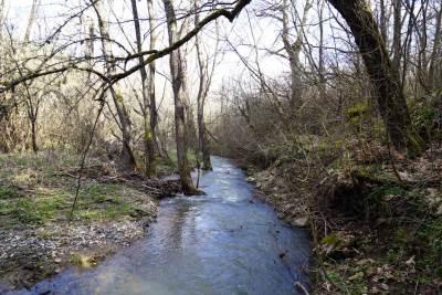 priroda, mačina, šuma, livada