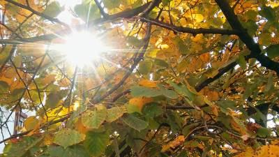 sunce jesen lišće