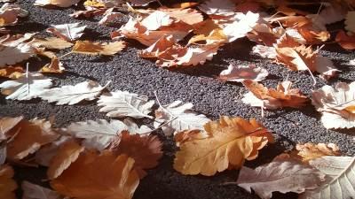 jesen lišće sunce vreme
