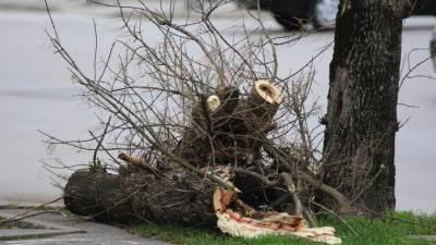 vetar grane drvo drveće