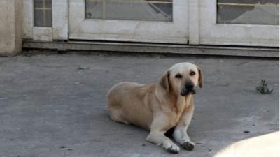 pas psi kuče mešanac lutalica