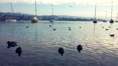 Švajcarska, Cirih, jezero, patke, jedrenjaci