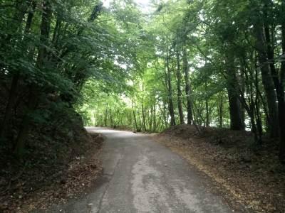 šuma, drveće, banj brdo, šehovi, šehitluci, put
