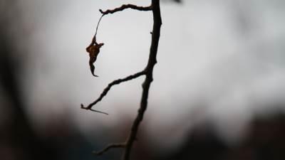 suva grana, list, jesen, zima, depresija