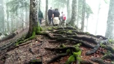 Sutjeska, OK fest, prašuma, šuma, perućica